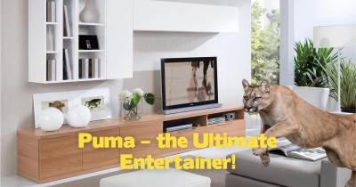 Puma – the Ultimate Entertainer!